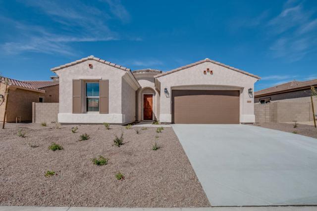 18408 W Thunderhill Place, Goodyear, AZ 85338 (MLS #5736192) :: Occasio Realty