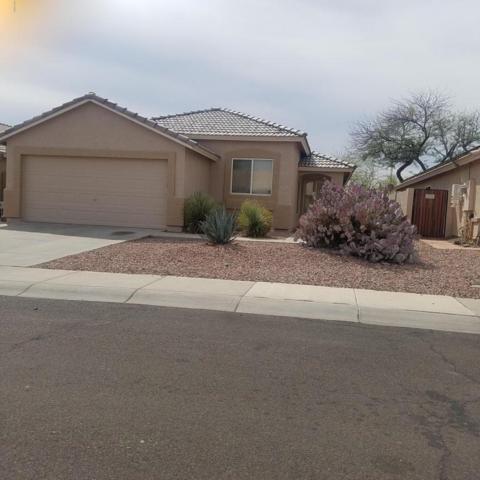 14754 N 154TH Lane, Surprise, AZ 85379 (MLS #5746108) :: Power Realty Group Model Home Center