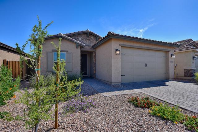 1846 W Bonanza Drive, Phoenix, AZ 85085 (MLS #5750227) :: Occasio Realty
