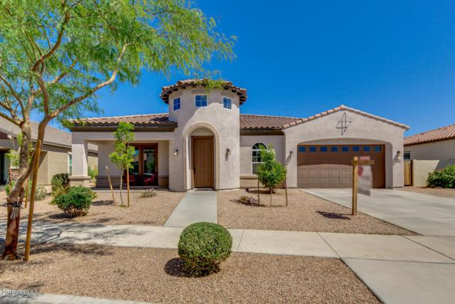 22166 E Cherrywood Drive, Queen Creek, AZ 85142 (MLS #5754242) :: Occasio Realty