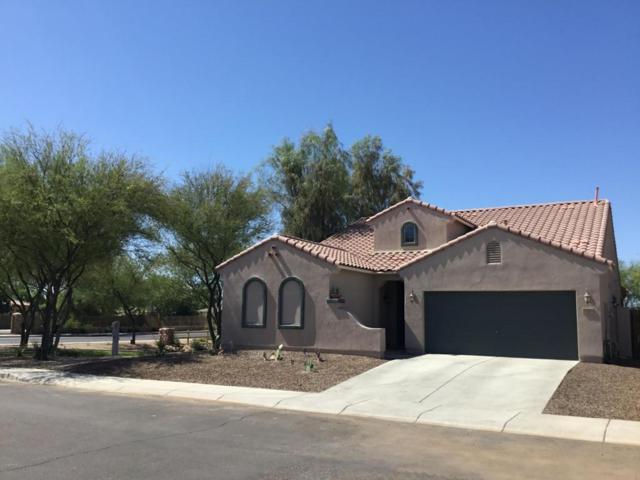 3510 E Lynx Place, Chandler, AZ 85249 (MLS #5775238) :: My Home Group