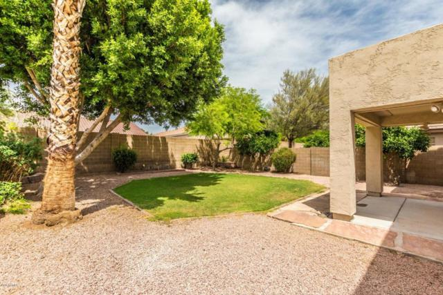 4358 E Gatewood Road, Phoenix, AZ 85050 (MLS #5777415) :: RE/MAX Excalibur