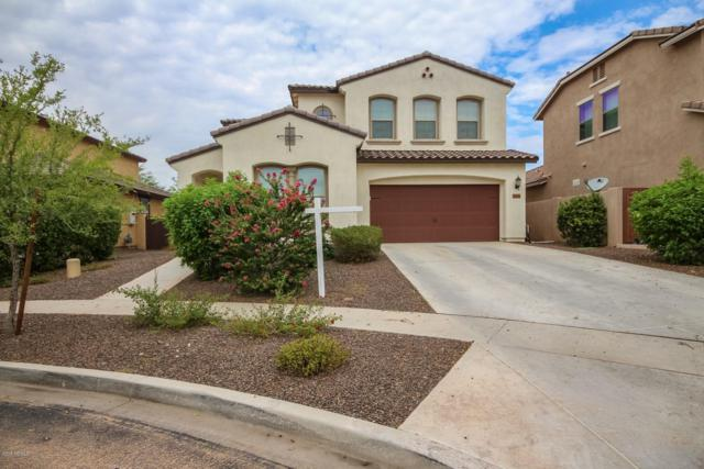 13080 N 147TH Drive, Surprise, AZ 85379 (MLS #5795439) :: Santizo Realty Group