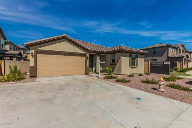 158 E Bluejay Drive, Chandler, AZ 85286 (MLS #5795583) :: The Laughton Team