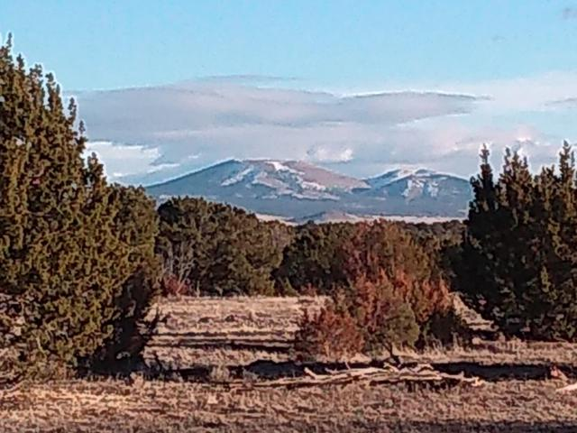 Park Show Low Unit 5 Lot #, Concho, AZ 85924 (MLS #5795665) :: NextView Home Professionals, Brokered by eXp Realty
