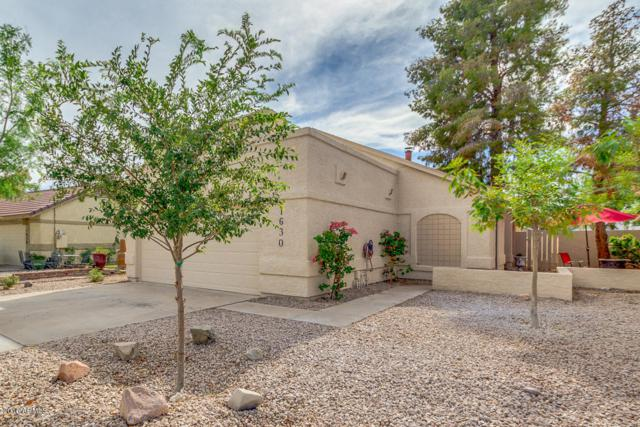 1630 N Comanche Drive, Chandler, AZ 85224 (MLS #5796197) :: The Everest Team at My Home Group