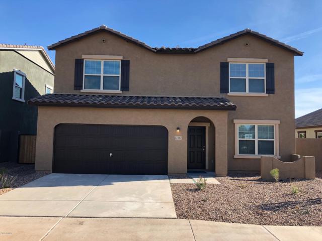 37267 W Cannataro Lane, Maricopa, AZ 85138 (MLS #5812278) :: Arizona 1 Real Estate Team