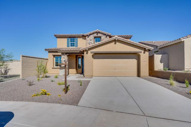 10656 W Anna Avenue, Peoria, AZ 85383 (MLS #5831075) :: The Results Group