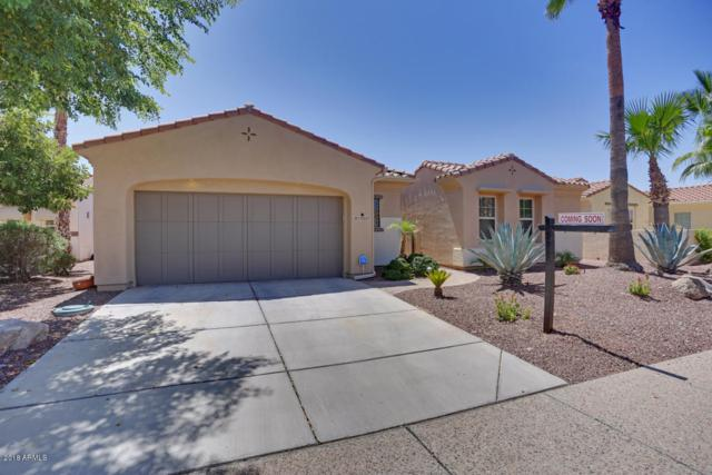 13537 W Nogales Drive, Sun City West, AZ 85375 (MLS #5840095) :: The Property Partners at eXp Realty
