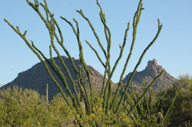 9382 E Desert Vista Road, Scottsdale, AZ 85255 (MLS #5843689) :: The W Group