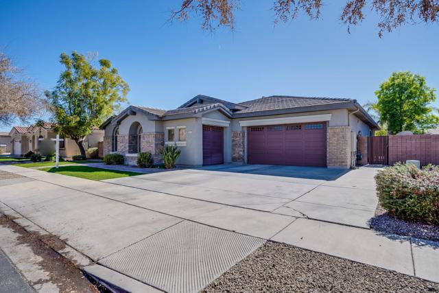 881 W Macaw Drive, Chandler, AZ 85286 (MLS #5856327) :: The Property Partners at eXp Realty