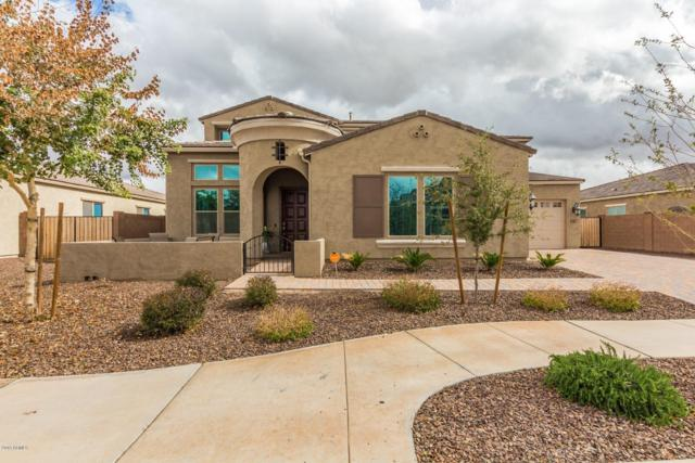 21347 S 201ST Way, Queen Creek, AZ 85142 (MLS #5879890) :: Riddle Realty