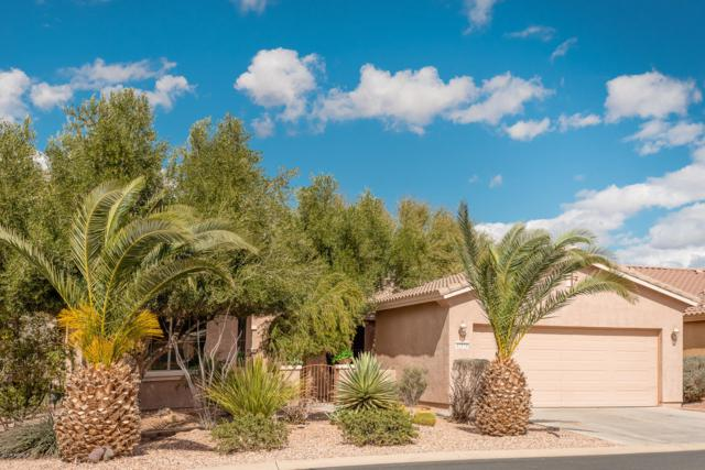 42976 W Morning Dove Lane, Maricopa, AZ 85138 (MLS #5883798) :: CC & Co. Real Estate Team