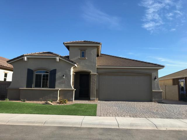 1177 W Snowbell Avenue, Queen Creek, AZ 85140 (MLS #5909160) :: Revelation Real Estate