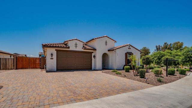 18633 W Elm Avenue, Goodyear, AZ 85395 (MLS #5935919) :: Relevate | Phoenix