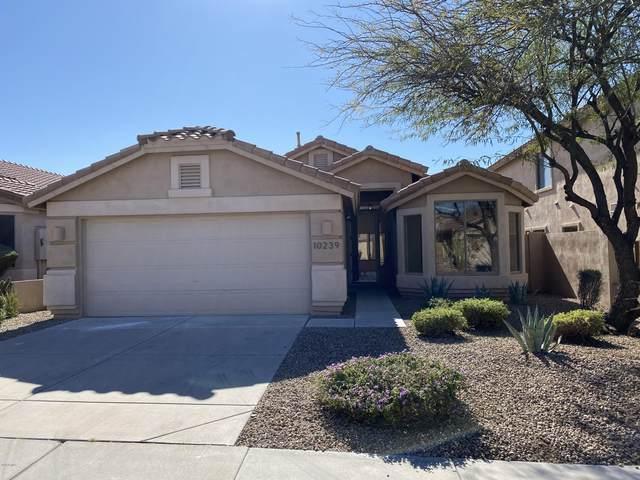 10239 E Hillery Drive, Scottsdale, AZ 85255 (MLS #6033213) :: The W Group