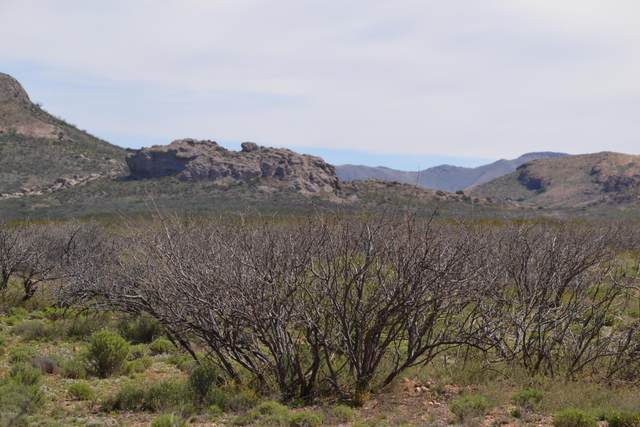 Tbd 37 Ac Four Winds Trail, Douglas, AZ 85607 (MLS #6052988) :: Howe Realty