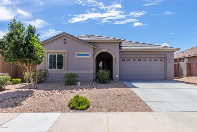 13225 W Cottontail Lane, Peoria, AZ 85383 (MLS #6055790) :: Power Realty Group Model Home Center