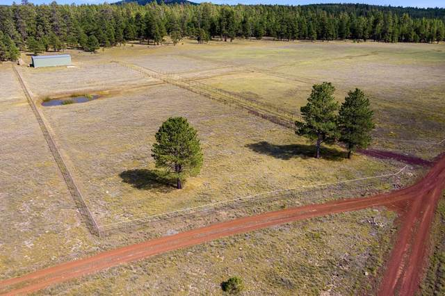 3137 Forest Service 91C Road, Mormon Lake, AZ 86038 (MLS #6123782) :: Balboa Realty