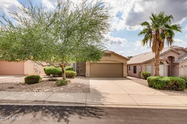 911 E Mohawk Drive, Phoenix, AZ 85024 (MLS #6299446) :: Elite Home Advisors