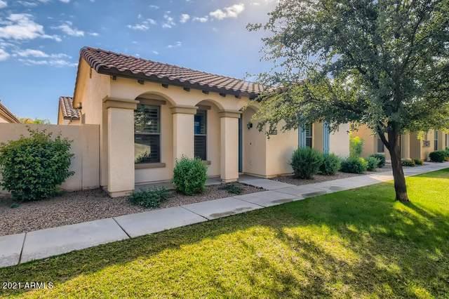 3864 S Bandit Road, Gilbert, AZ 85297 (MLS #6307195) :: Zolin Group