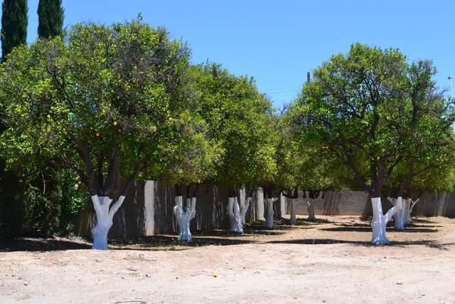 2061 N Orchard, Mesa, AZ 85213 (MLS #5590444) :: Relevate | Phoenix