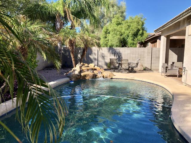 4140 N Dania Court, Litchfield Park, AZ 85340 (MLS #5836389) :: Devor Real Estate Associates