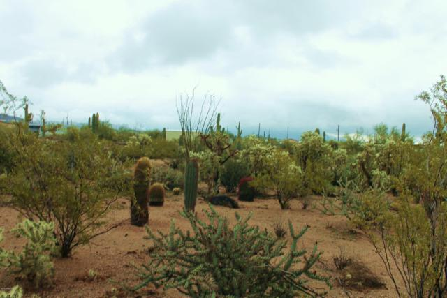 0 N Main Drive, Apache Junction, AZ 85120 (MLS #5859325) :: The Daniel Montez Real Estate Group
