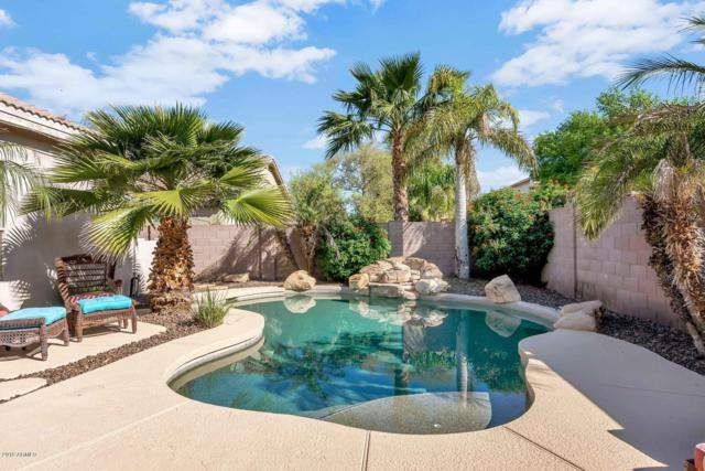 445 N Bluejay Drive, Gilbert, AZ 85234 (MLS #5902277) :: Riddle Realty
