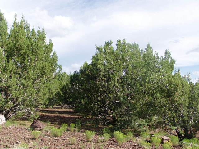 LOT 8 Uphill Trail, Vernon, AZ 85940 (MLS #4417322) :: The Bill and Cindy Flowers Team