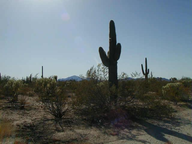 27361 E Dulcinea Lane, Florence, AZ 85132 (MLS #5380023) :: The Wehner Group