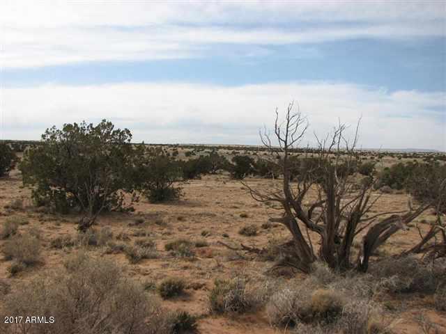 Lot 623 Ccr #4 - 6014 Buck Tank Rd, Overgaard, AZ 85933 (MLS #5631228) :: Brett Tanner Home Selling Team