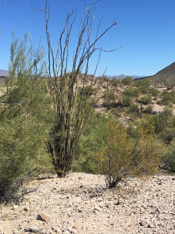 00 S Everett Bowman Trail, Wickenburg, AZ 85390 (MLS #5676582) :: Brett Tanner Home Selling Team