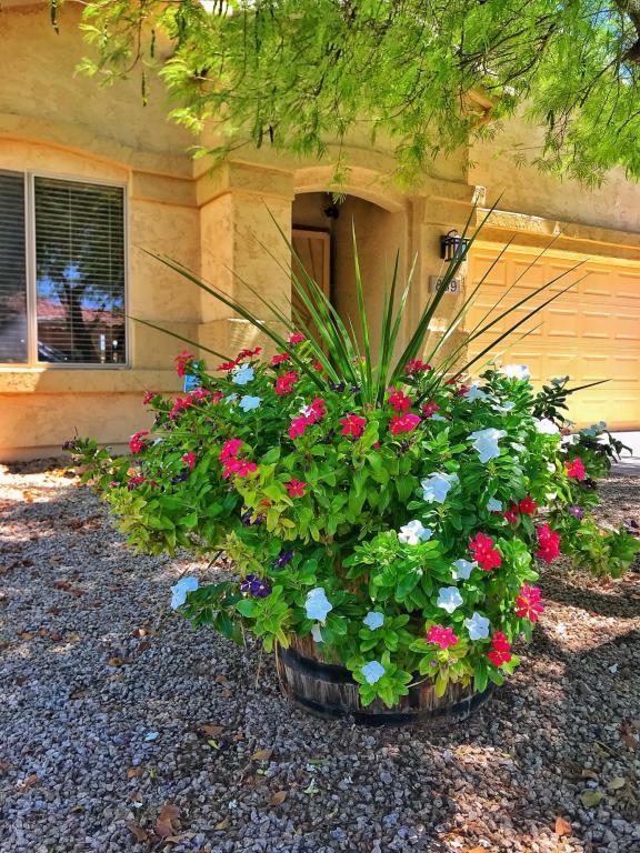 839 E Tortoise Trail, San Tan Valley, AZ 85143 (MLS #5782381) :: Realty Executives
