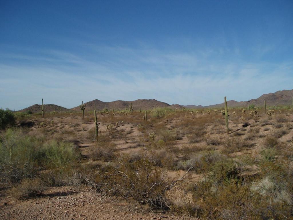 30402 Carefree Highway - Photo 1