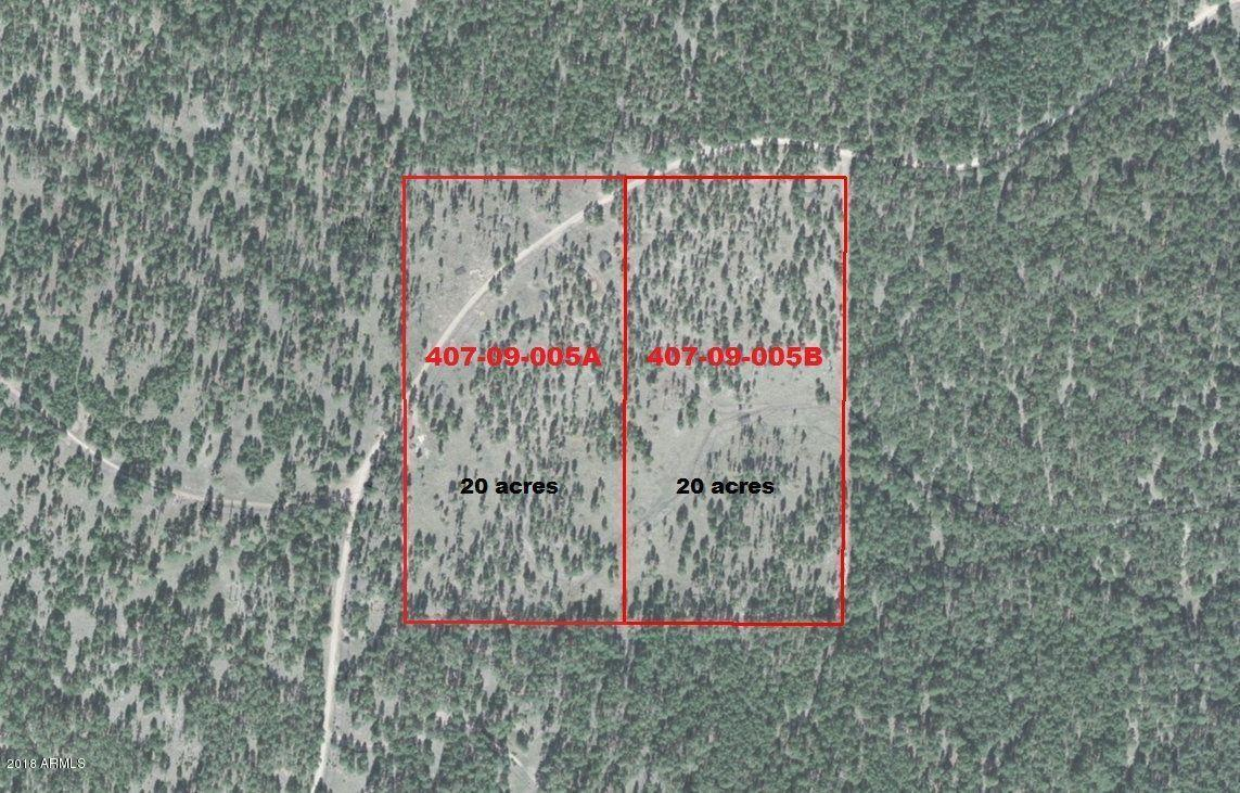 5A Forest Road 75 - Photo 1