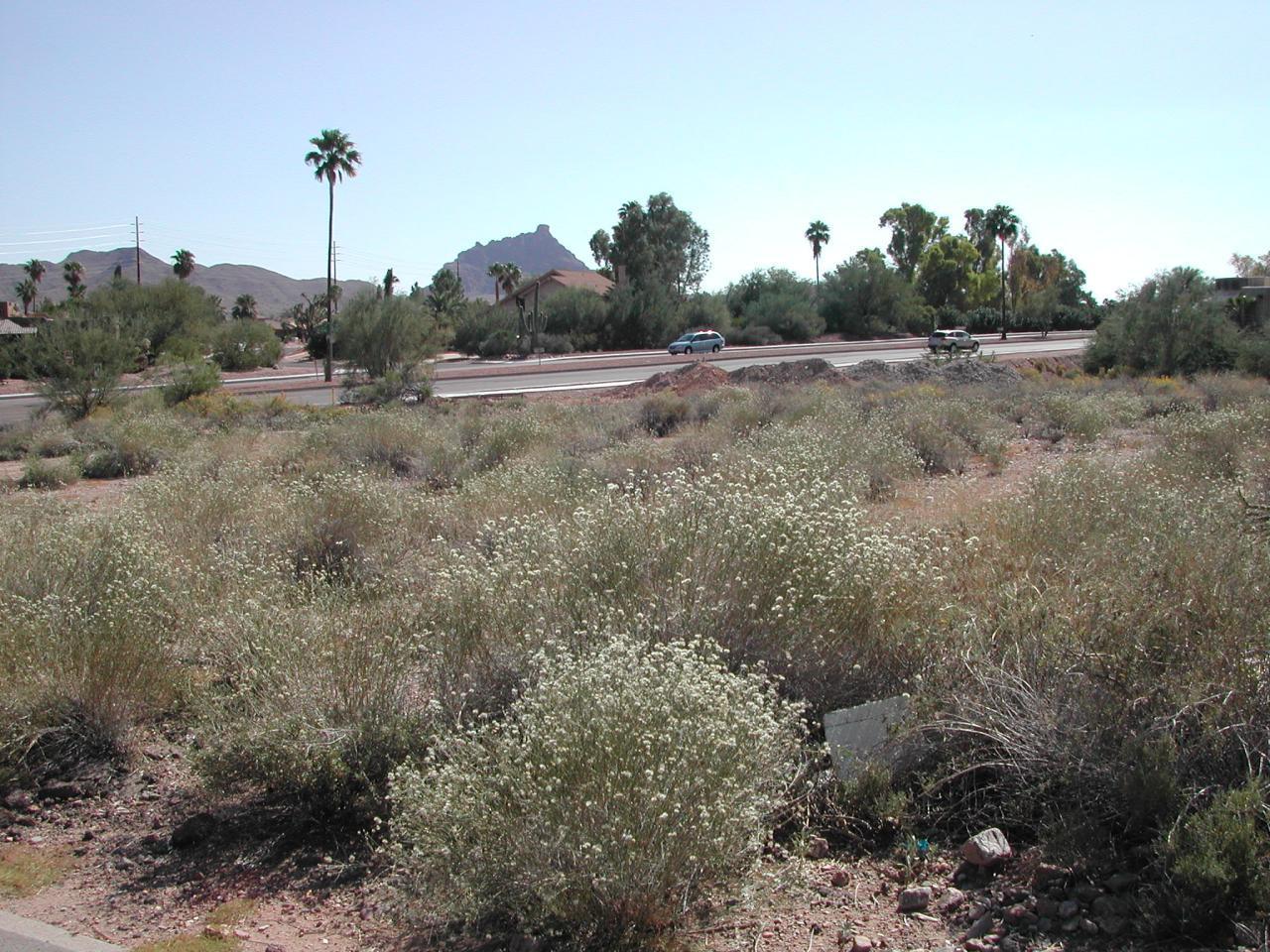 11230 Saguaro Boulevard - Photo 1