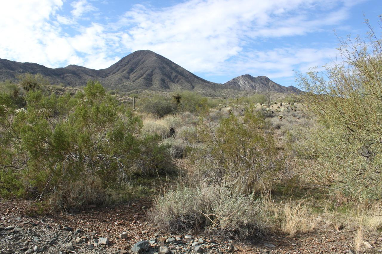 16136 Desert Fox Parkway - Photo 1