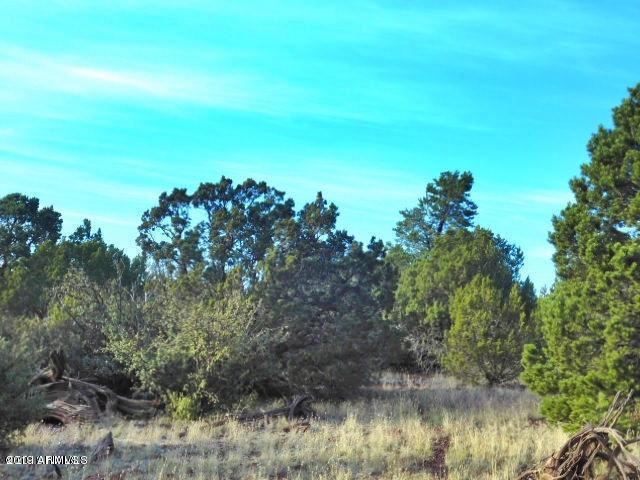 1633 W Maverick Lane, Williams, AZ 86046 (MLS #5905477) :: Yost Realty Group at RE/MAX Casa Grande