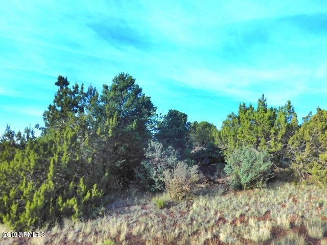 1699 W Antelope Lane, Williams, AZ 86046 (MLS #5905487) :: Yost Realty Group at RE/MAX Casa Grande