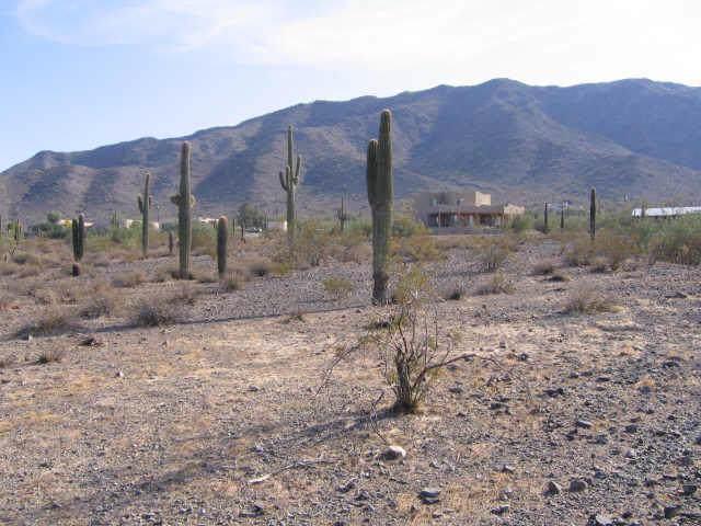 9600 S 25TH Avenue, Phoenix, AZ 85041 (MLS #5955401) :: Riddle Realty