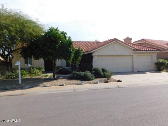 1713 W Gunstock Loop, Chandler, AZ 85286 (MLS #6013018) :: The Kenny Klaus Team