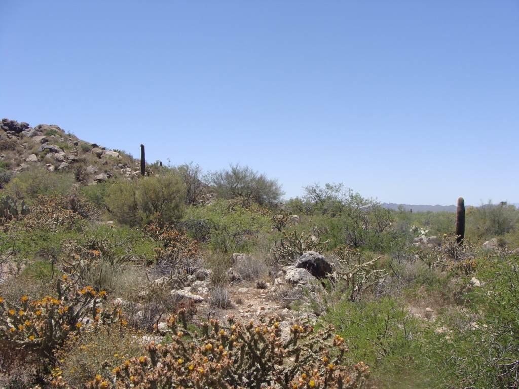 23295 Gold Dollar Trail - Photo 1