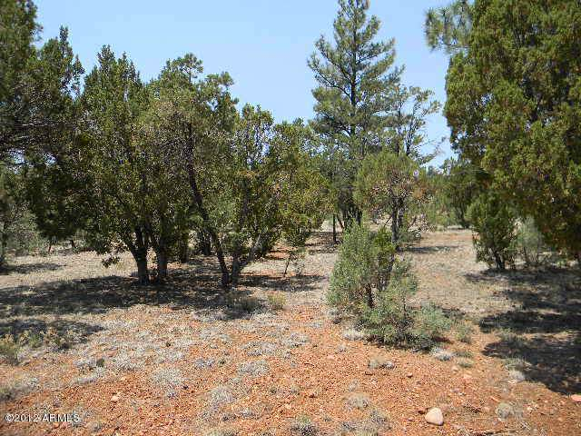 2760 Jaguar Circle, Overgaard, AZ 85933 (MLS #6023583) :: Conway Real Estate