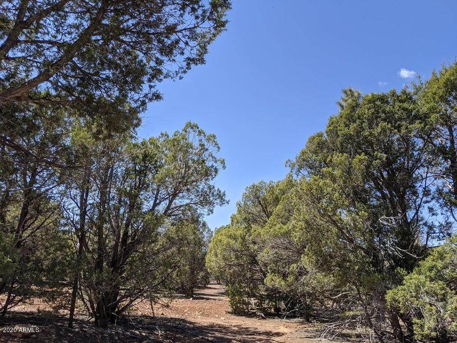 TBD Timber Ranch Road - Photo 1