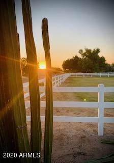 322 W Via De Palmas, San Tan Valley, AZ 85140 (MLS #6164171) :: D & R Realty LLC