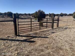 2514 Cherokee Lane, Clay Springs, AZ 85923 (MLS #6206066) :: Yost Realty Group at RE/MAX Casa Grande