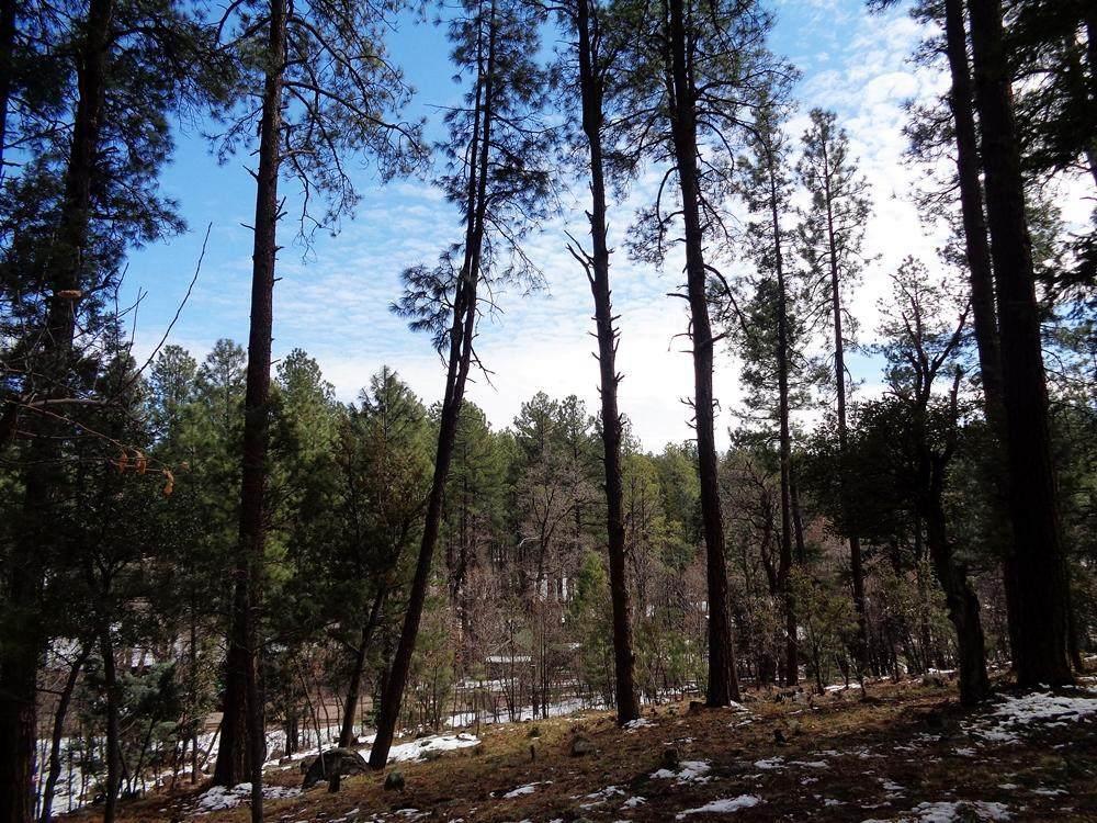 1262 Christopher Creek Loop - Photo 1