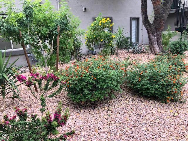 4114 E Calle Redonda Road #52, Phoenix, AZ 85018 (MLS #6231054) :: Dave Fernandez Team | HomeSmart
