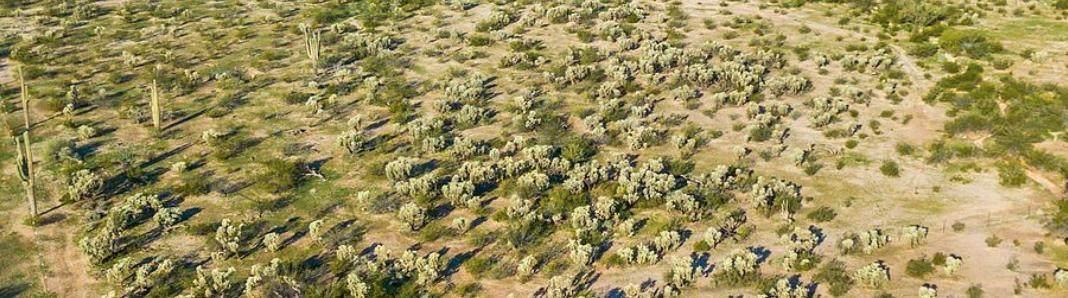 000 Dead Mans Gulch Road - Photo 1